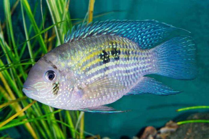 sanovnik riba