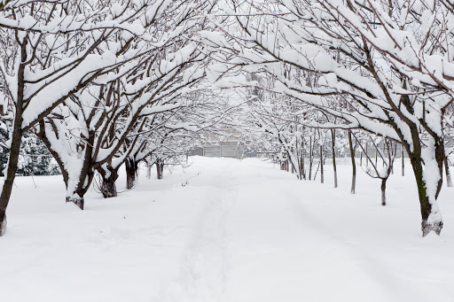 sanovnik sneg