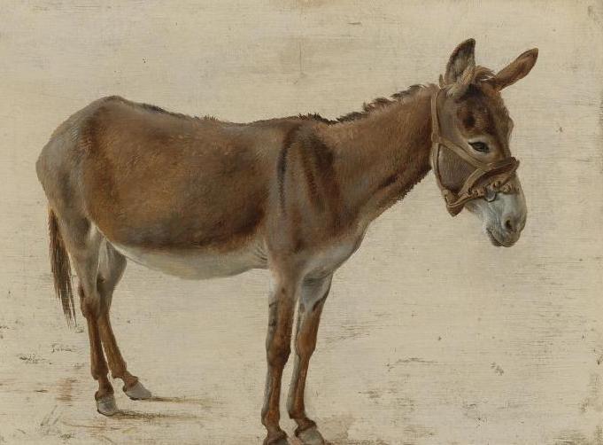 sanovnik magarac