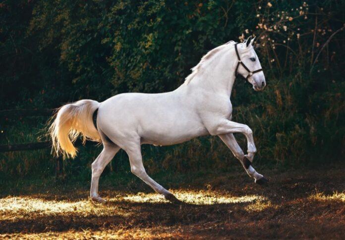 sanovnik konj