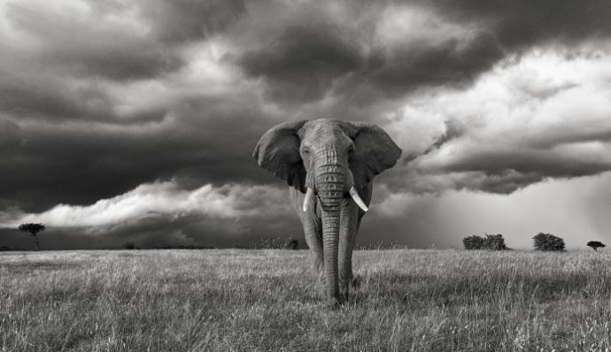 sanovnik slon