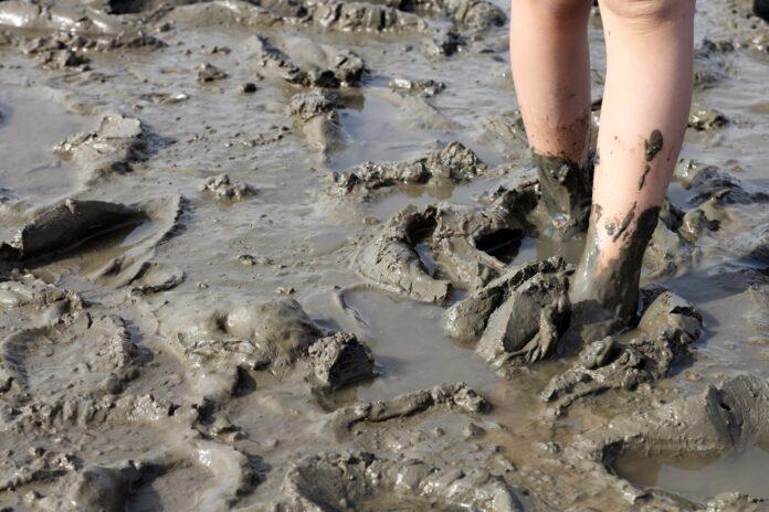 sanovnik blato